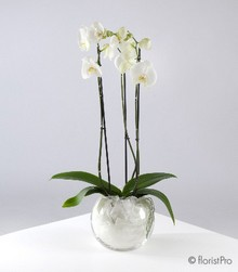 Orchid Planter   Available in varying colours.