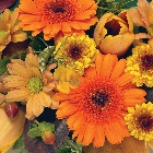 Posy  Orange and Gold